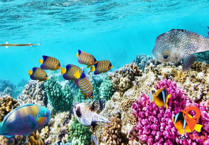 Great Barrier Reef là vỉa san hô lớn nhất trên thế giới