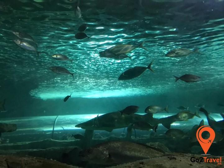 Công viên thủy sinh Sea Life Aquarium Sydney