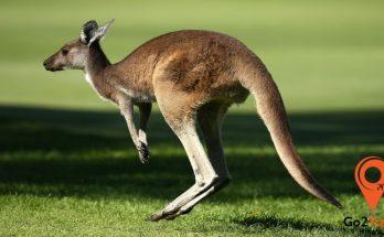 đất nước kangaroo