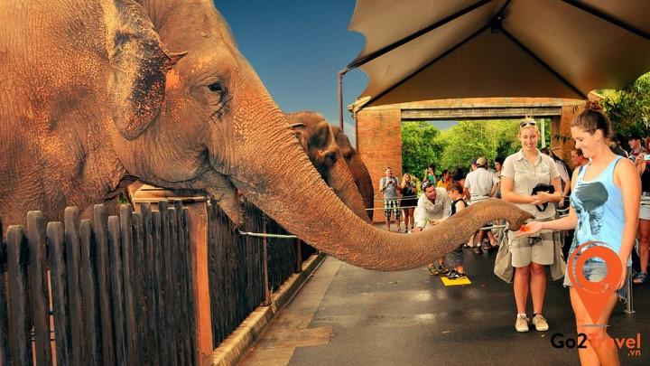 Sở thú Australia