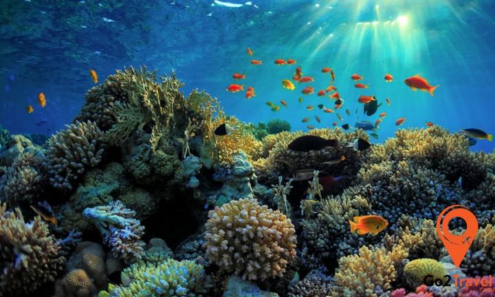 Great Barrier Reef nằm ở ngoài khơi bờ biển Queensland là nơi mà bạn được thỏa sức khám phá bãi đá ngầm với hàng nghìn loài san hô và rất nhiều loài cá với đủ màu sắc sặc sỡ khác
