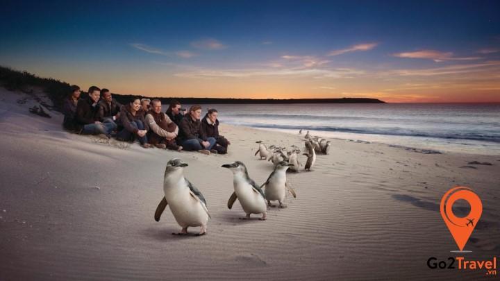 Xem chim cánh cụt diễu hành