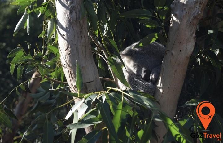 công viên hoang dã Featherdale là địa điểm lý tưởng để du khách tìm hiểu về thế giới động vật của nước Úc