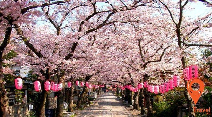 du lịch Nhật bản dịp Tết nguyên đán