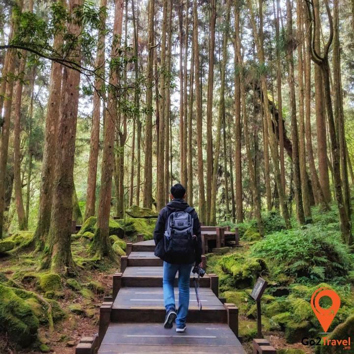 Vào tham quan trong rừng với con đường được làm bằng gỗ