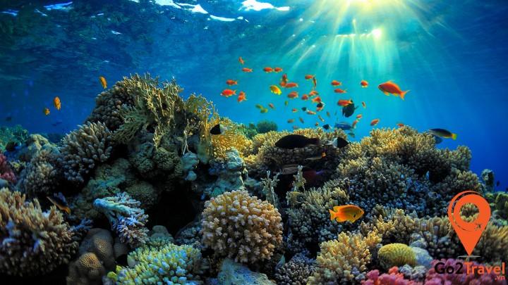 Rạn san hô đầy màu sắc