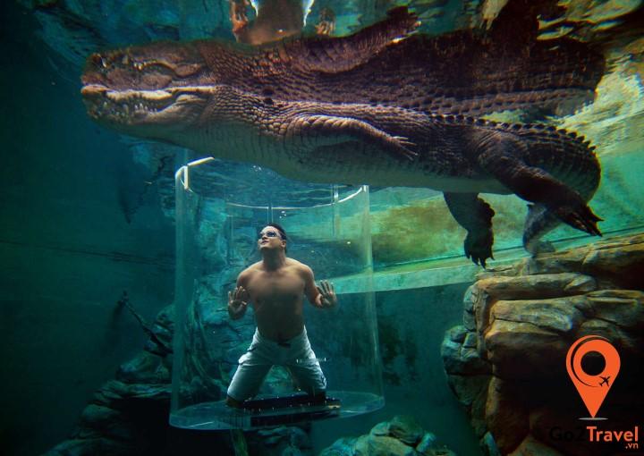 Tắm cùng cá sấu tại công viên giải trí Crocosaurus