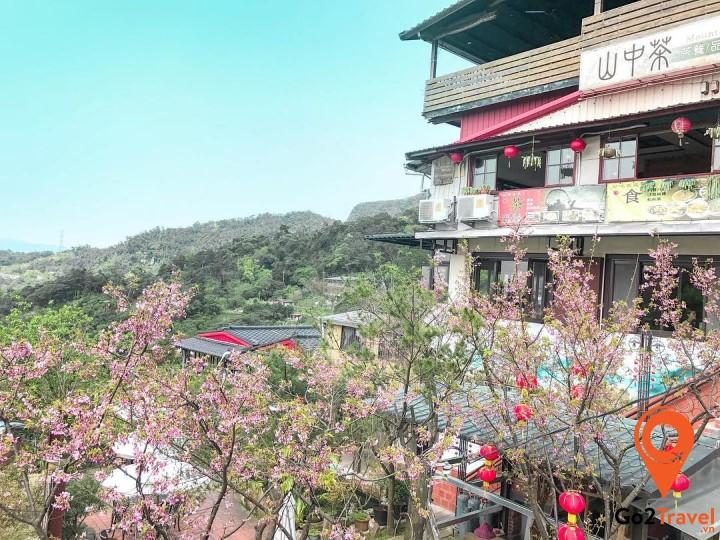 Thời tiết Đài Loan vào khoảng tháng 1 đến tháng 3 rất đẹp, có nắng và hoa nở