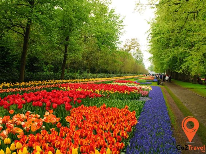 Khung cảnh mùa xuân tuyệt đẹp trên một góc phố Hà Lan