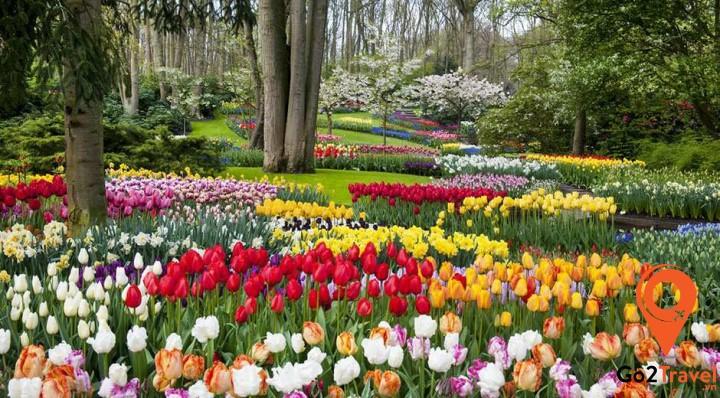 Mùa xuân tràn ngập sắc hoa tulip