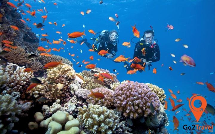Lặn biển ngắm san hô là hoạt động vô cùng thú vị bạn nên thử khi đến đảo Koh Rong