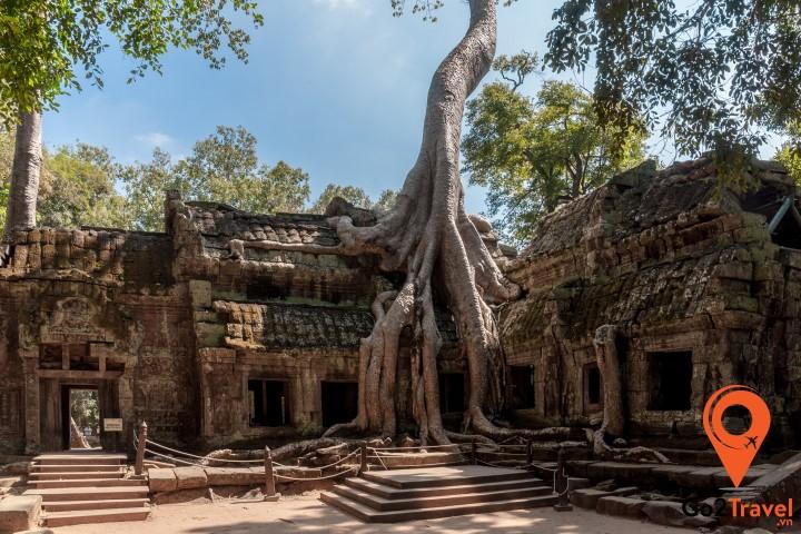 Cây cổ thụ bao phủ ngôi đền
