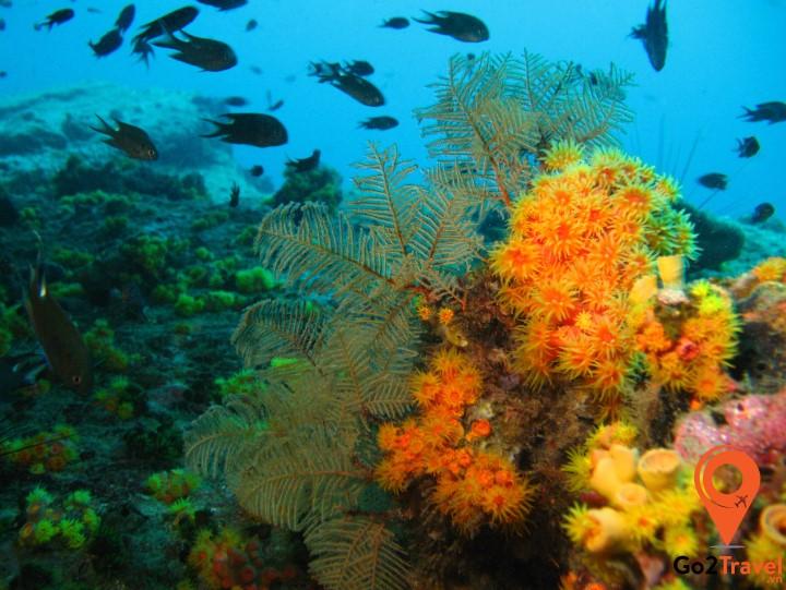 Rạng san hô nhiều màu sắc