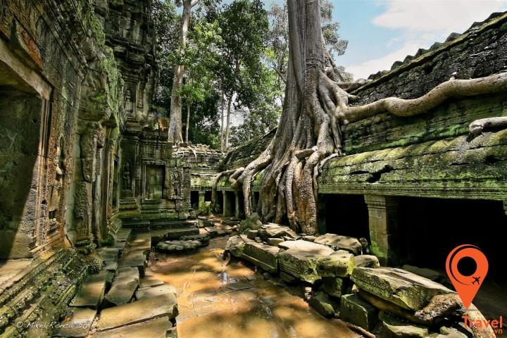 Ta Prohm - ngôi đền bị ngự trị bởi những rễ cây khổng lồ