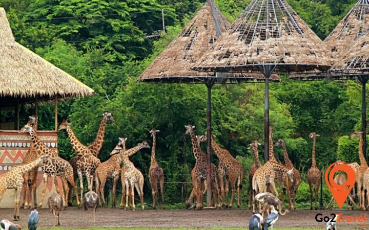 động vật hoang dã bên trong vườn thú Safari World