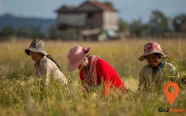 Nông nghiệp là một trong những ngành kinh tế trụ cột của Campuchia