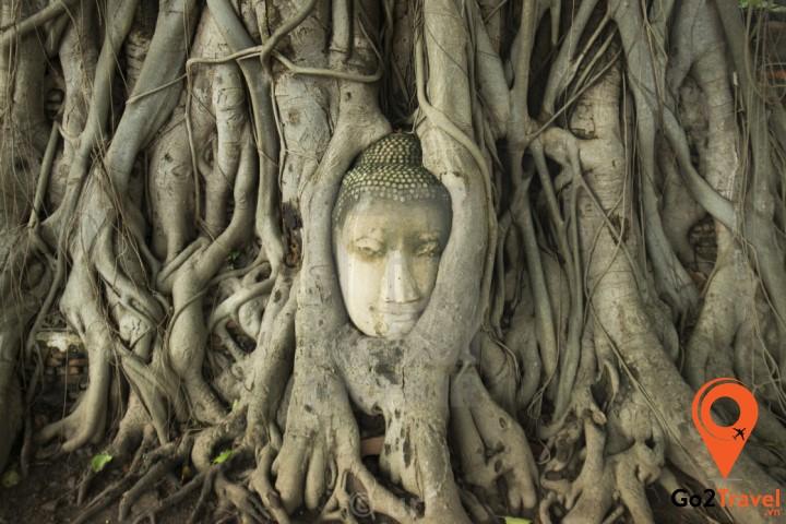 Hình ảnh phần đầu đức Phật nằm trong bộ rễ đa bồ đề