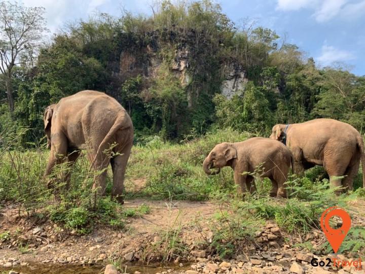 Trải nghiệm những điều thú vị ở công viên voi Chiang Mai