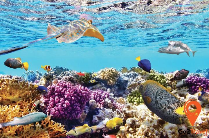 Tham gia lặn biển ngắm cá và san hô