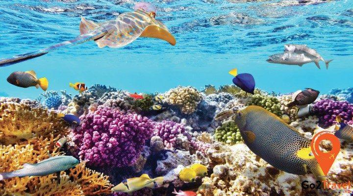 Khám phá thiên đường san hô tại Thái Lan - đảo Coral (Pattaya)