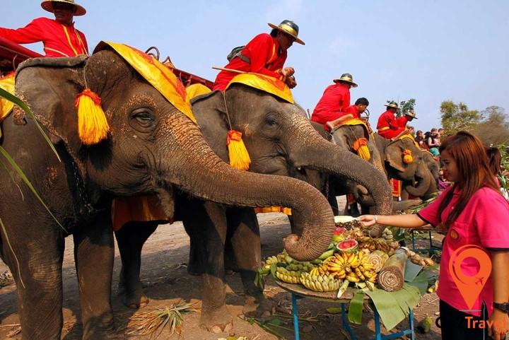 Lễ hội voi Surin