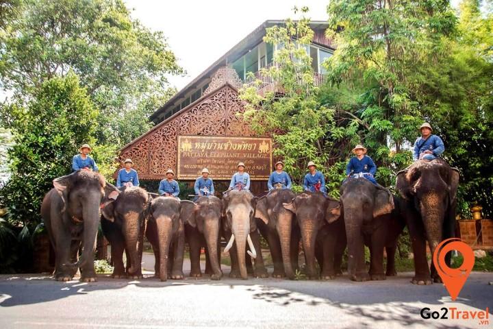 Pattaya Elephant Village – Làng voi Pattaya