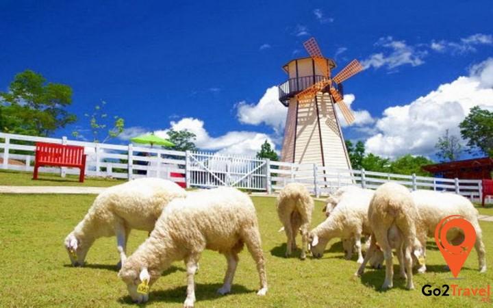 Nông trại cừu siêu cute ở Pattaya
