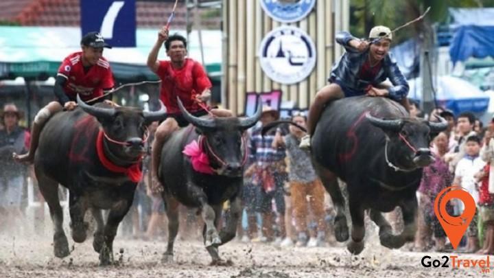 Lễ hỗi đua trâu cuối mùa mưa